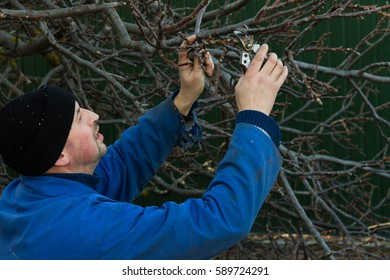A gardener gets ready to saw off a tree branch