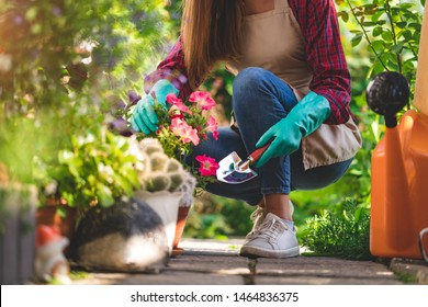 Gardener in gloves and apron plants petunia flower in home garden with shovel. Gardening and floriculture. Flower care