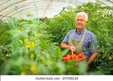 Gardener in the greenhouse
