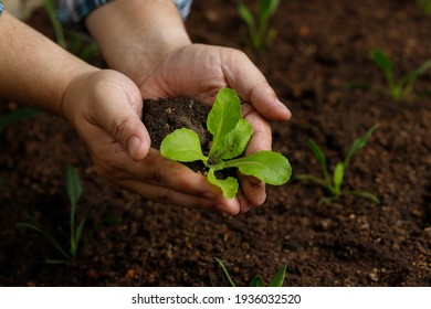 Gardener hand holding young vegetable sprout before planting in fertile soil