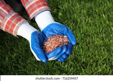 Gardener hands holding autumn granular lawn fertilizer above the lawn in the autumn garden