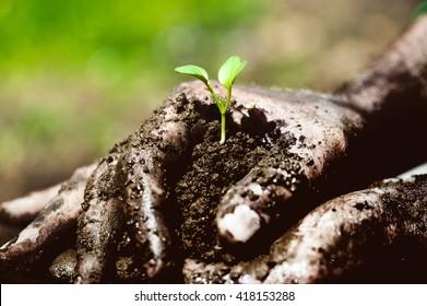 Gardener hands preparing soil for seedling in ground