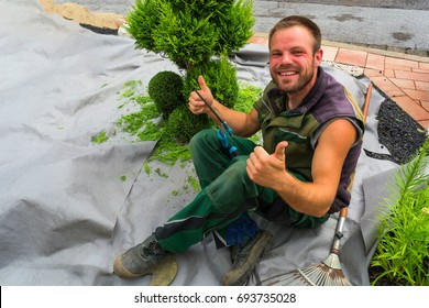 Gardener with a hedge trimmer cutting Thuja or boxwood in shape.