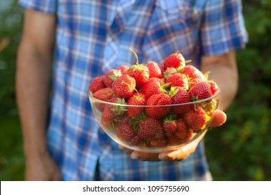 Gardener in his garden. He holding the bowl full of ripe strawberries