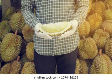 gardener hold slide ripe durian fruit on garden.
