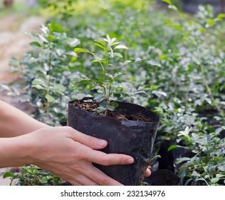 Gardener holding a bag plastic of plant.