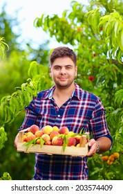 gardener holding a crate of peach fruit, harvesting