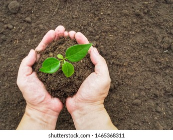 Gardener holding young small tree (sapling) and soil in hand. For safe the World concept with copy space.