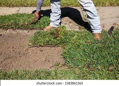 Gardener installing natural grass turf, professional installing beautiful new sod lawn