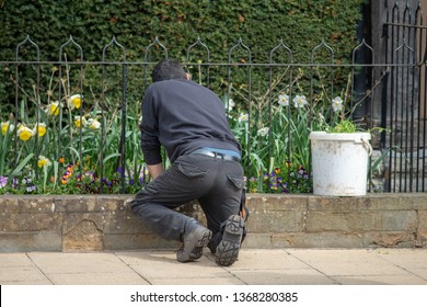 gardener kneels over wall and removes weeds from a flower bed in an urban street