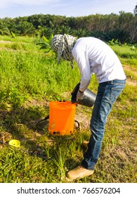 The gardener are mixing herbicide to prepare for spraying weeds around the young palm trees.