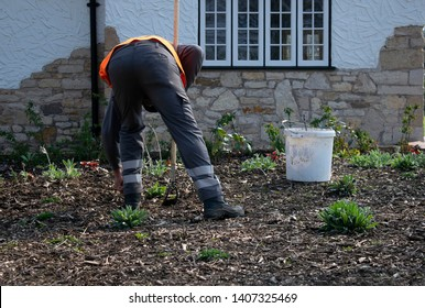 Gardener on his back working with orange vest and dutch hoe near white rubbish bucket in a small garden.