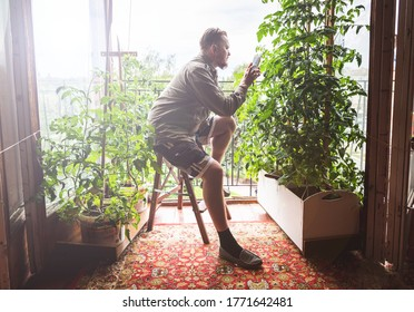The gardener at the open window in the mini-garden in the room takes a smartphone photographs the grown tomato. A man gardening in a city apartment.