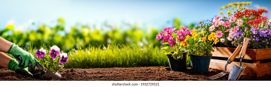 Gardener planting flowers in the garden - Shutterstock ID 1932729521