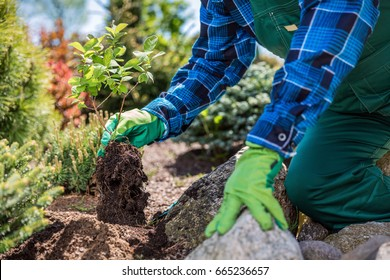Gardener planting new tree in a garden. Garden planning.