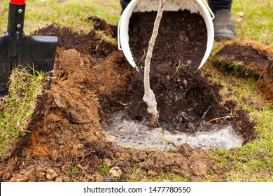 The gardener is planting a tree in the ground. Pit for planting a tree. Property management of the land plot. Work hands on the ground. Planting plants in the ground.