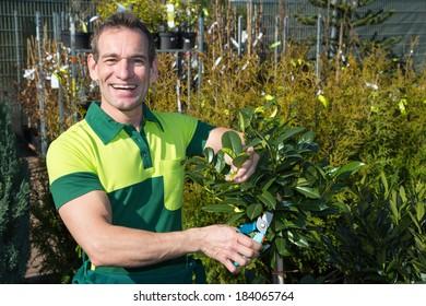 Gardener pruning a tree or plant in nursery