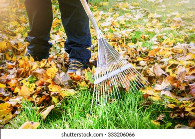 Gardener raking fall leaves in garden