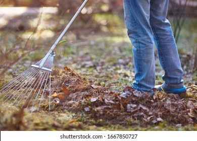 the gardener removes fallen leaves in spring or autumn. faceless. Close-up
