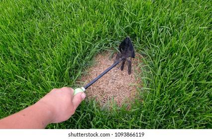 Gardener repairing lawn grass, after crippling domashnim pets