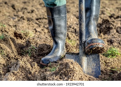 Gardener with rubber boots and spade digs the ground. Digging up the ground is not good and does more harm than good for the garden.