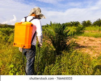 The gardener is spraying herbicides around the young palm tree to prevent them from nesting and eating young palm trees.
