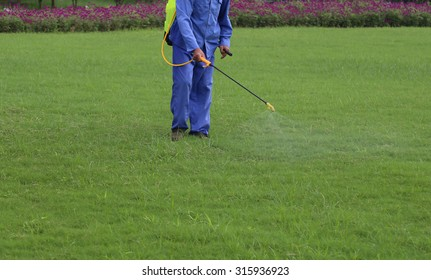 Gardener is spraying of insecticides at lawn