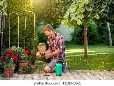 Gardener taking care of plants in flower pots in garden. Man uproot weed from ground
