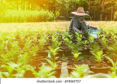 The gardener is taking care of the trees. Agriculture concept.