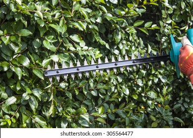 Gardener trimming bushes, with a trimmer machine