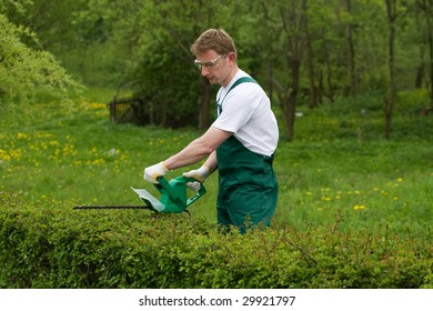 Gardener is trimming the hedge.