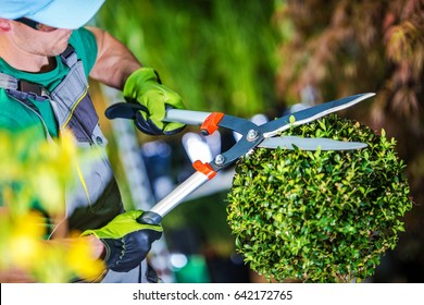 Gardener Trimming Plants. Topiary Work. Passion For Plants Concept Photo.