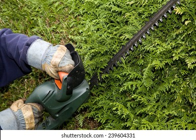 Gardener trims hedge with electric trimmer wearing safety gloves