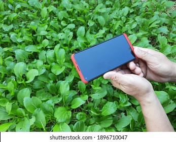 Gardener use smart phone to take photo , search online information for analyzing agricultural problems in organic vegetable garden that Thai villagers normally grow in back yard. Smart farming concept