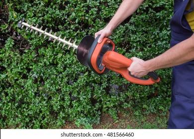 Gardener using an hedge clipper in the garden