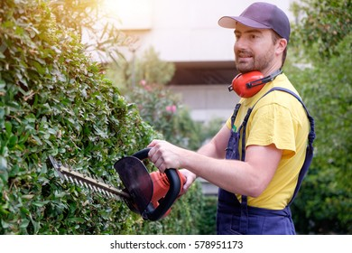 Gardener using an hedge clipper in the garden