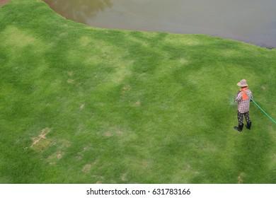 the gardener is watering the grasses in the garden