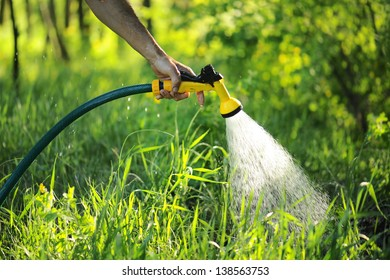 gardener watering the lawn in the garden