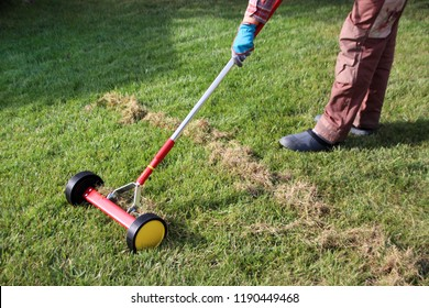 Gardener woman dethatching lawn with a roller moss removal rake in the autumn garden