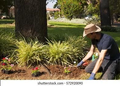 A Gardener working in the garden