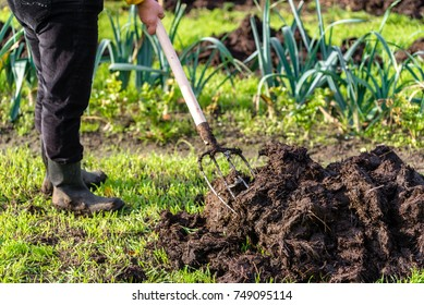Gardener working in the vegetable garden. Autumn gardening, organic farming concept.