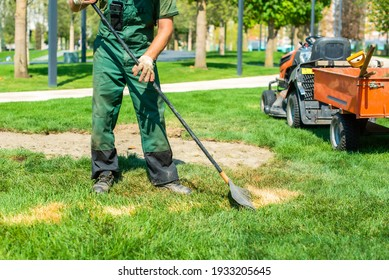 the gardener works with the lawn. sows fresh grass and removes dead grass. shovels and rakes lie in the tractor