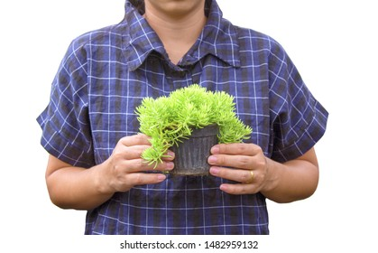 Gardener young woman holding a pot of growing seedlings in her hands for sale isolated on white background.