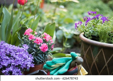 Gardener's gloves and tools lie among flowers.