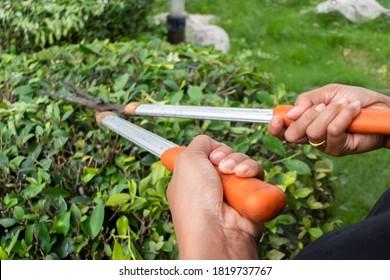 Gardeners hand to grasp the garden shears.