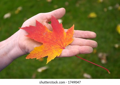 A gardener's hand holding an orange maple leaf against a gassy green background