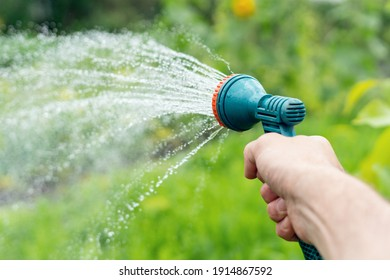 Gardener's hand holds a hose with a sprayer and watered the plants in the garden.