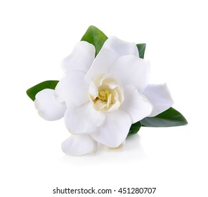 Gardenia images stock photos vectors shutterstock gardenia flowers on white mightylinksfo