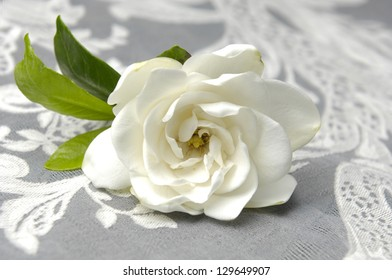 Gardenia with lace texture