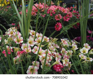 Gardening beauty of nature, blooming beautiful delicate flowers